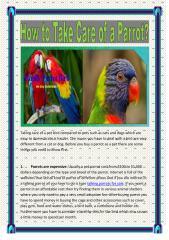 talking_parrots_for_sale.PDF